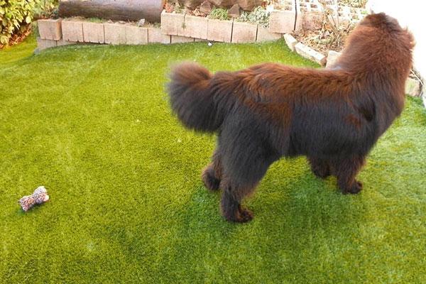 erba sintetica cane serravalle