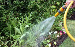 come risparmiare acqua in giardino tecniche