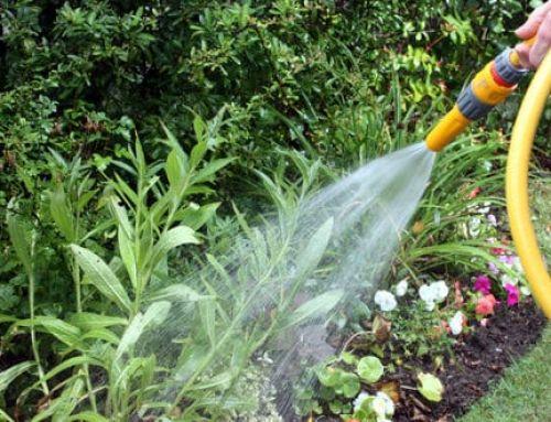 Come risparmiare acqua in giardino: tecniche e consigli utili